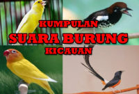 download suara burung