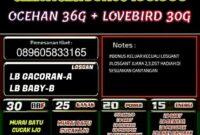 LATBER Burung Rutin Selasa-Kamis Sabtu, Dampit - Bogor ( BBF Enterprise )