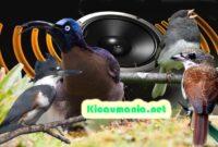 suara tembakan burung copy